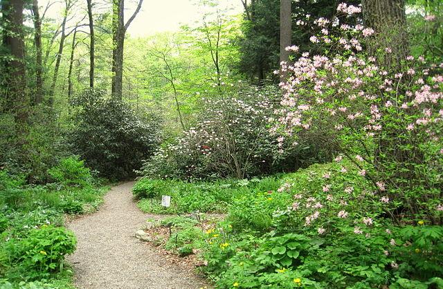 New England plants