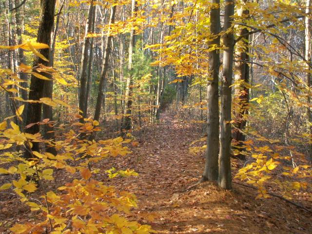 Fall foliage at Paint Mine