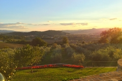 Sunset over the olive grove