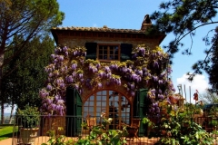 Wisteria on the south end of the main house
