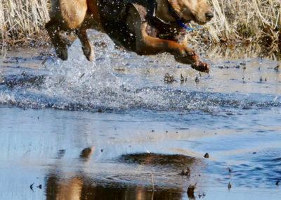 Cowboy Jumping