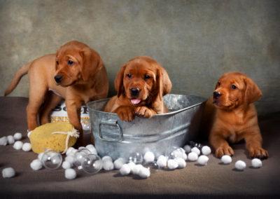 Three in a Bucket