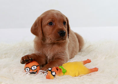 Pup With Toys