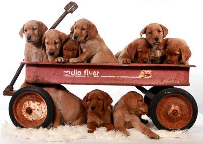 Hotties pups in wagon