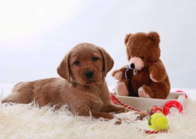 Hottie pups with teddie