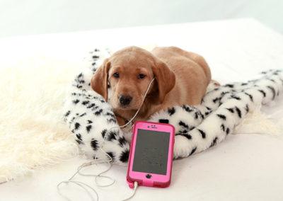 Listening iPhone
