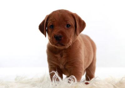 Standing pup