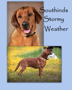 Stormy coversheet