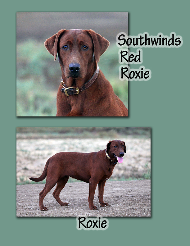 Red Roxie Sheet