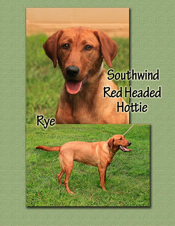 Rye cover sheet