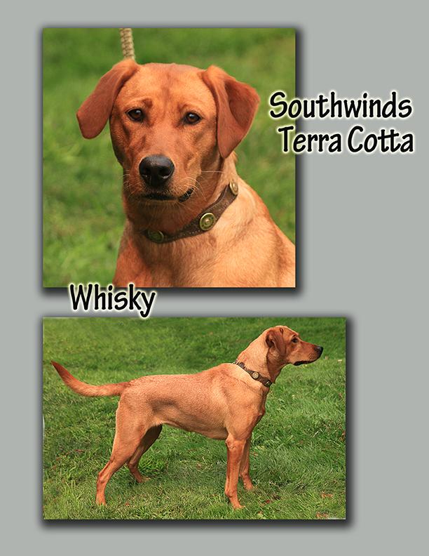 southwinds terra cotta