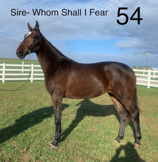 Lot 54 - Mid Ohio Standardbred Yearling Sale - Dublin Valley Farms
