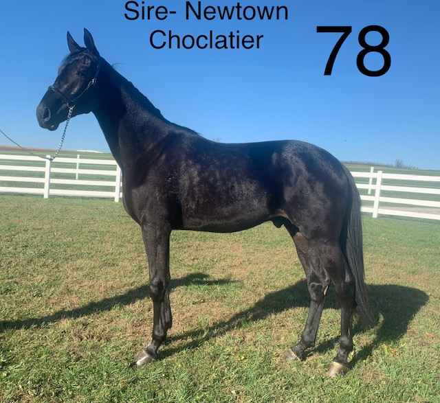 Lot 78 - Mid Ohio Standardbred Yearling Sale - Dublin Valley Farms