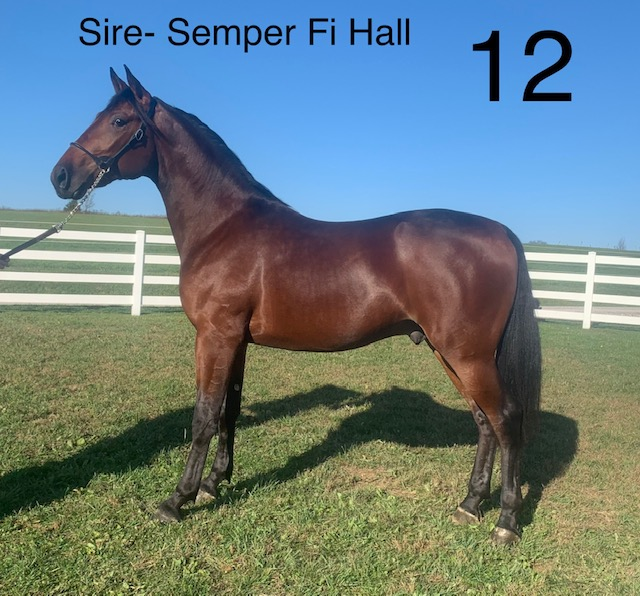 Lot 12 - Mid Ohio Standardbred Yearling Sale - Dublin Valley Farms
