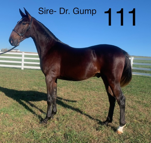 Lot 111 - Mid Ohio Standardbred Yearling Sale - Dublin Valley Farms