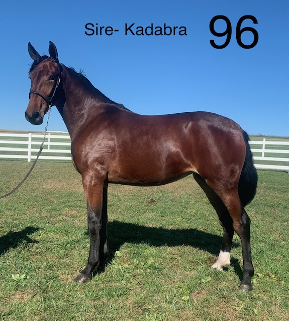 Lot 96 - Mid Ohio Standardbred Yearling Sale - Dublin Valley Farms