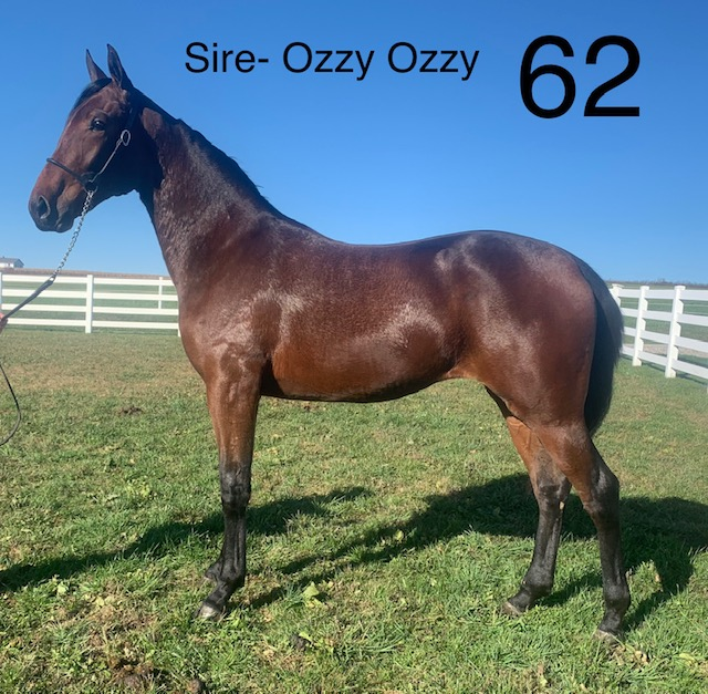 Lot 62 - Mid Ohio Standardbred Yearling Sale - Dublin Valley Farms