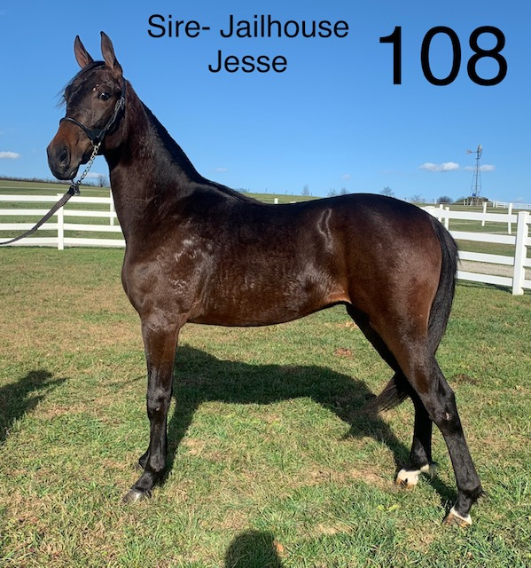 Lot 108 - Mid Ohio Standardbred Yearling Sale - Dublin Valley Farms