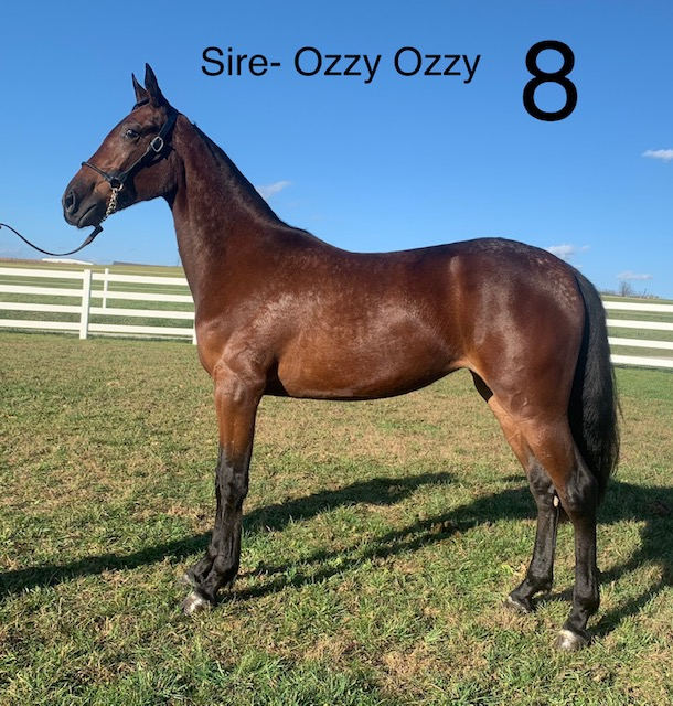 Hip 8 - Mid Ohio Standardbred Yearling Sale - Dublin Valley Farm