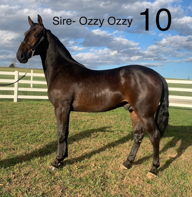 Lot 10 - Mid Ohio Standardbred Yearling Sale - Dublin Valley Farms