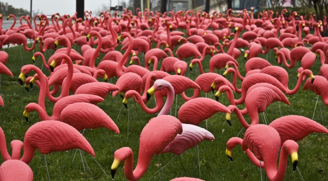 A field of pink flamingos-a decorating excess that looks great in this instance!