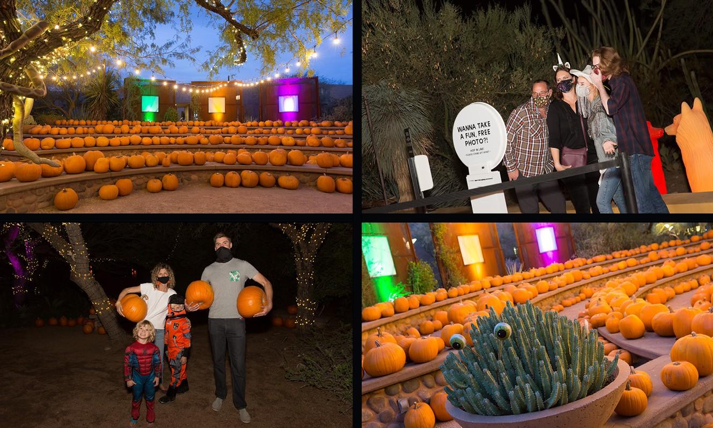 How Desert Botanical Garden Created a Safe and Interactive Halloween Experience!