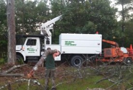 tree removal pic 1