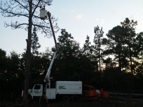 tree trimming pic