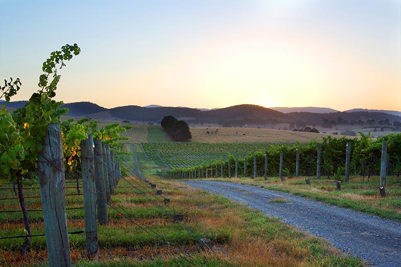 mandala vineyards