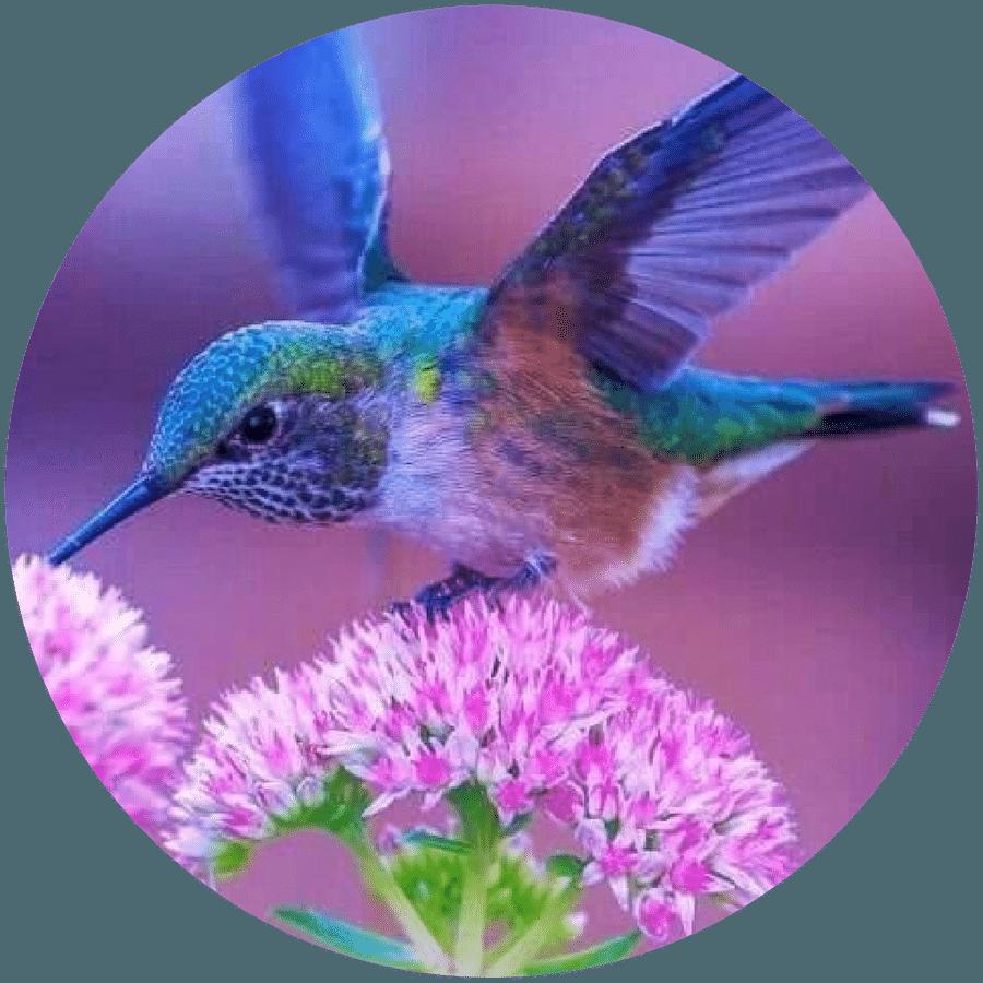 hummingbird souljourneys.coach