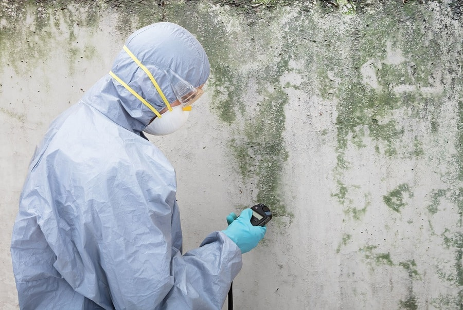 Mould Removal and Remediation Services