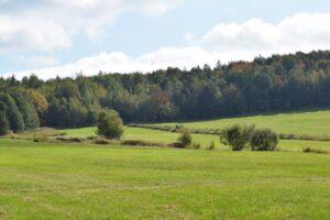 Panorama sur le champ et la forêt du début d'automne