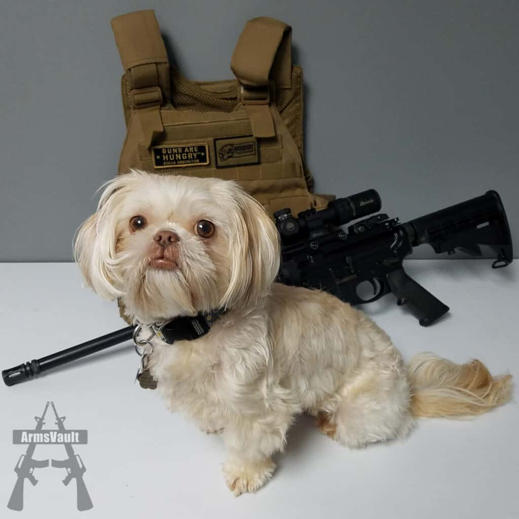 National Dog Day - Tactical Shih Tzu Maggie
