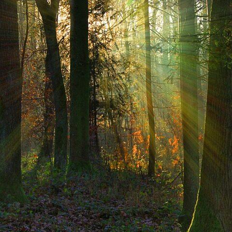 ray of light (1)