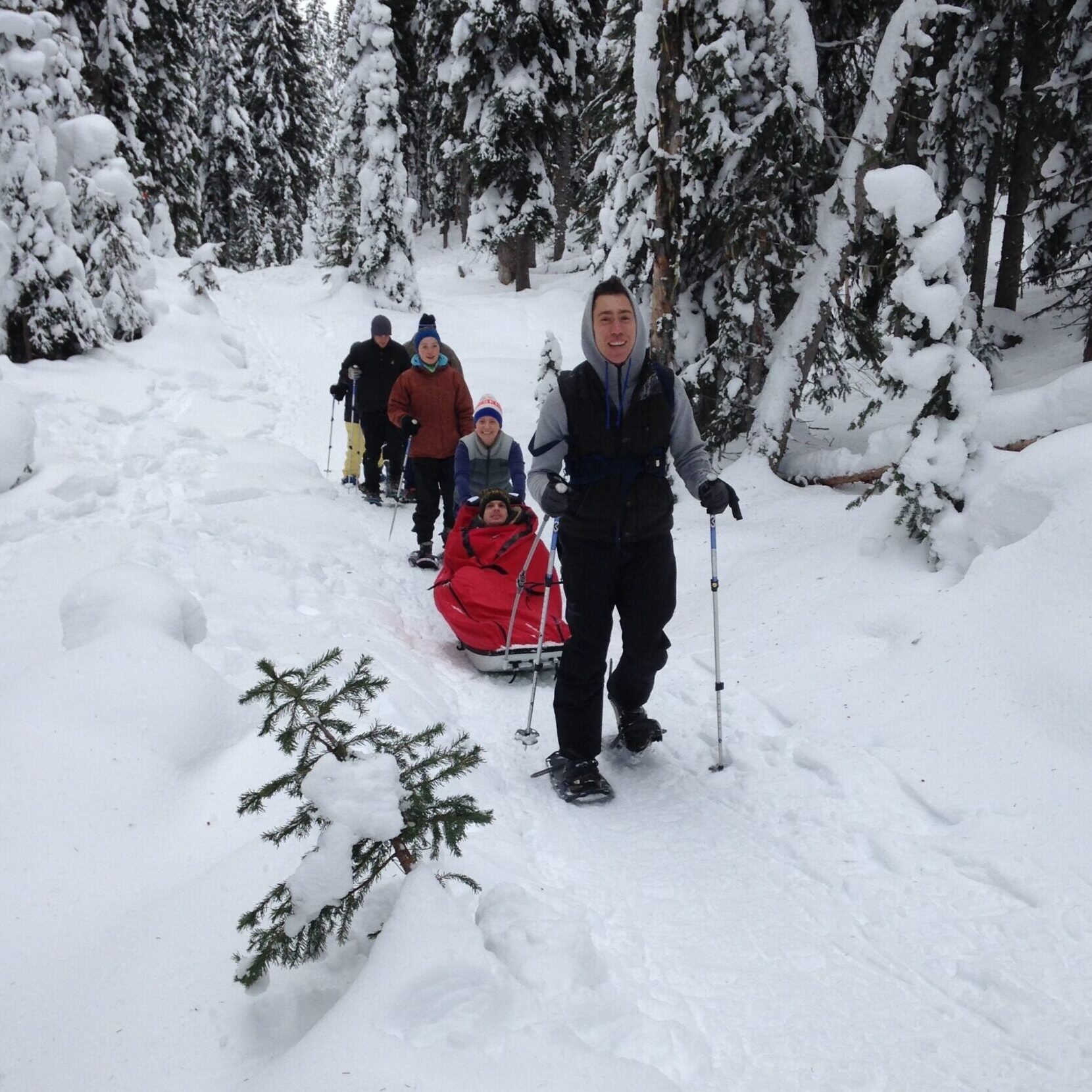 A group of snowshoers on a snow-covered trail in a snowy forest. In front is a man pulling a pulk - a red sled.