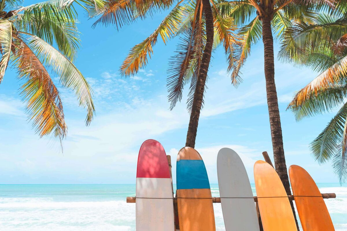 surfboard palm