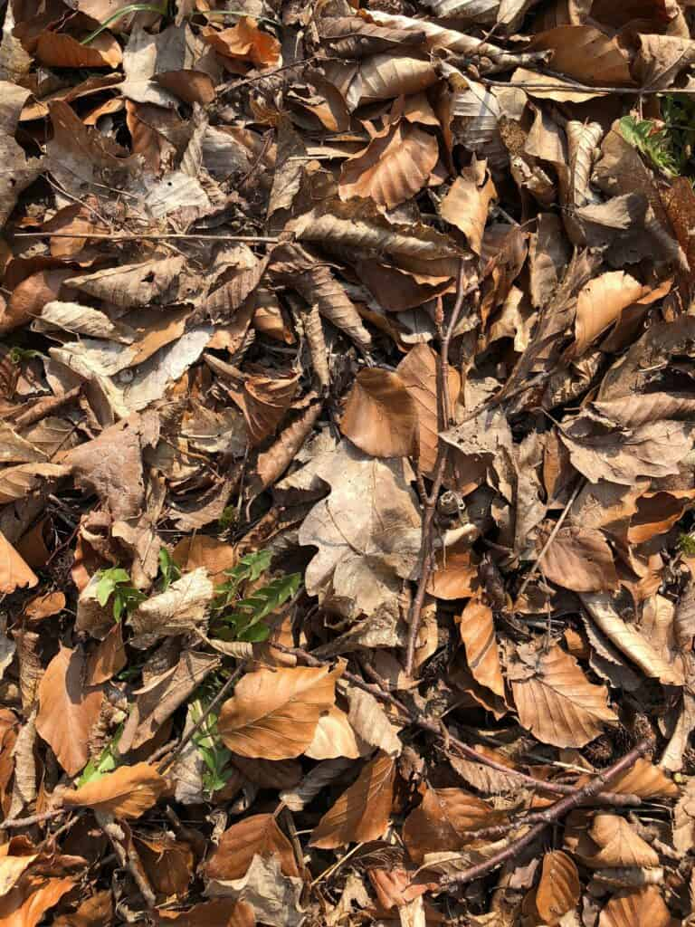 if you want to compost a deal animal use lots of dead leaves