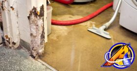 3 Sure Fire Ways to Prevent Mold From Growing In Your Home