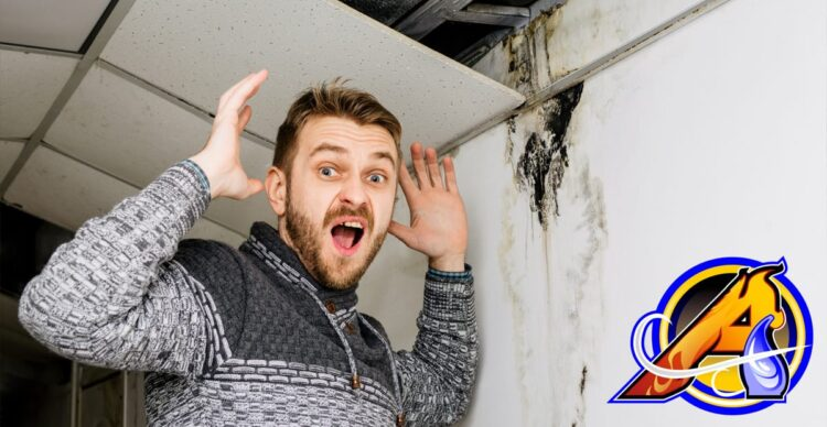Basement Flooding - Management and Prevention
