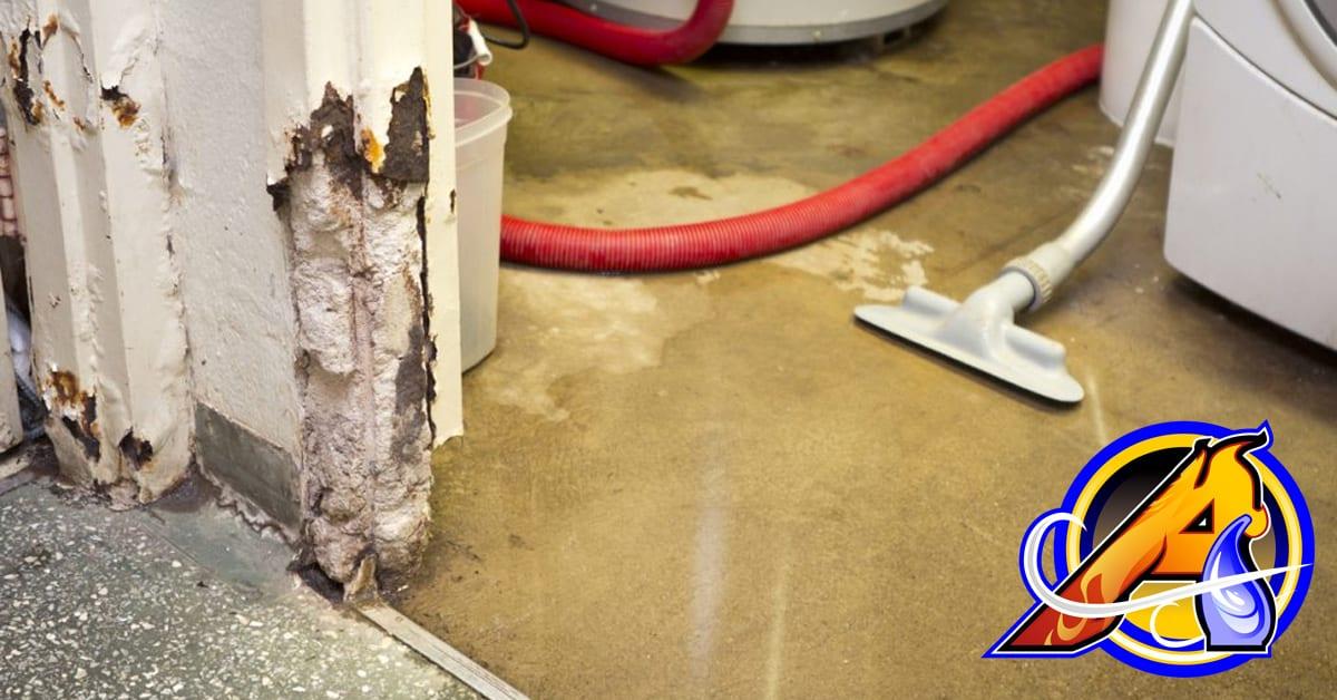 Mold Damage Shop Vac