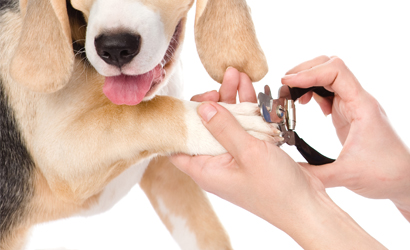 Nail Trimming at Preppy Pet West Houston