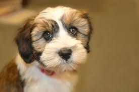 Preppy Pet West Houston | Dog Grooming Prices