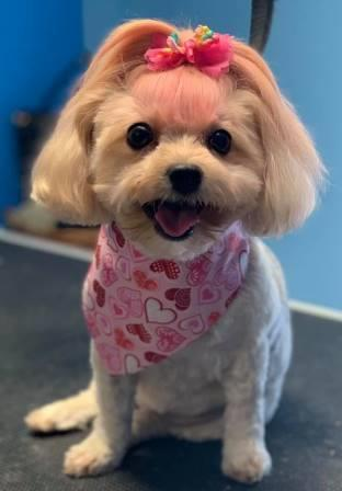Preppy Pet West Houston   Dog Grooming Creative Coloring