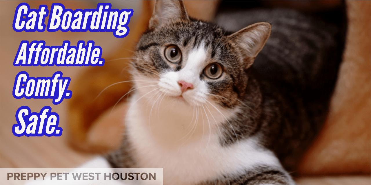 Cat Boarding Houston, TX | Preppy Pet West Houston