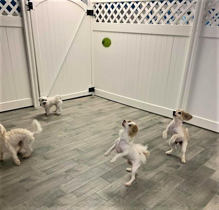 Doggie Daycare   Preppy Pet West Houston