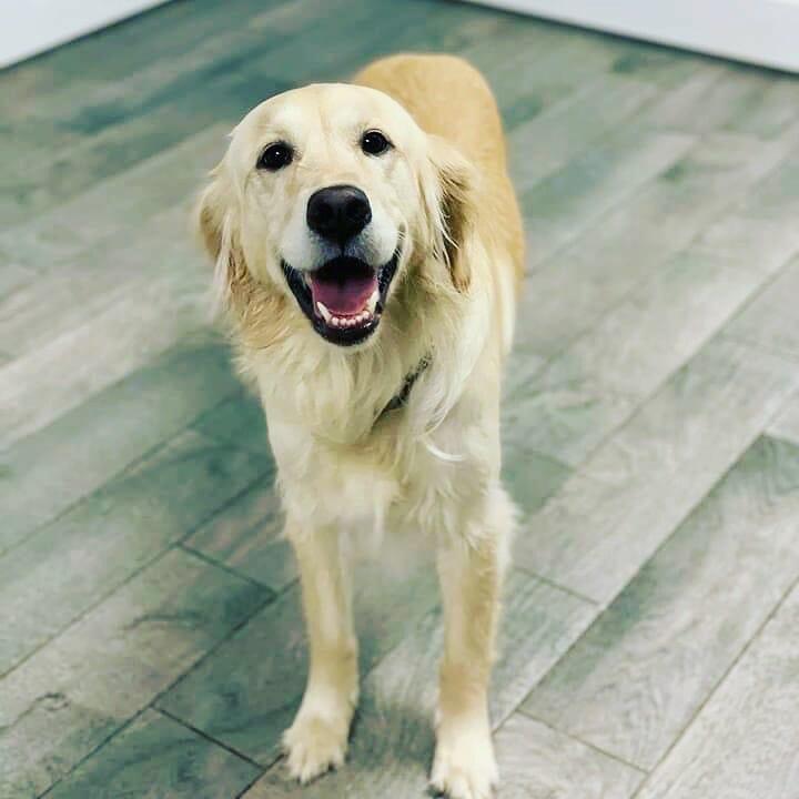 Dog Boarding | Preppy Pet West Houston