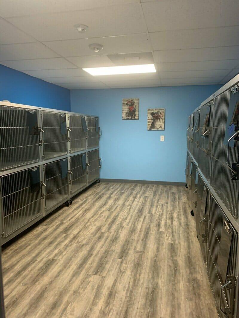 Big Mini Dog Boarding Suites