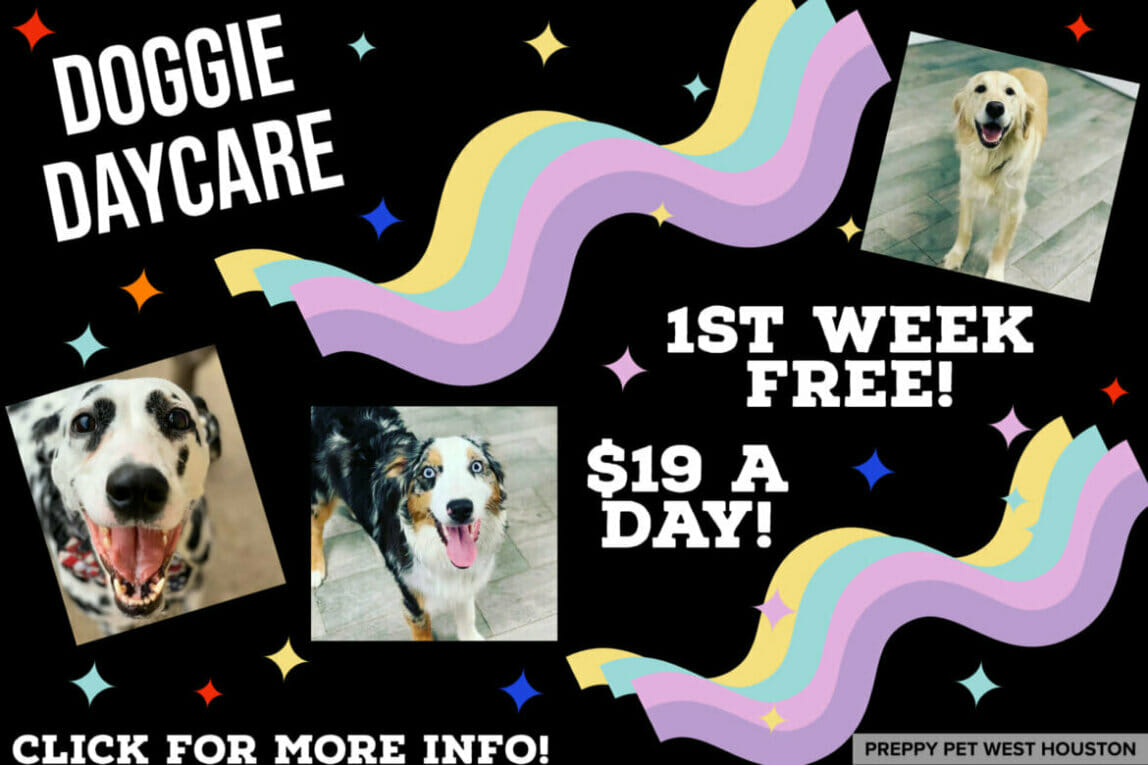 Doggie Daycare Houston, TX | Preppy Pet West Houston
