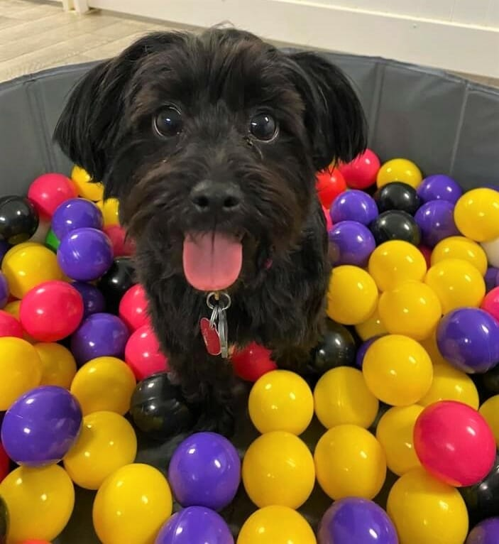 Doggie Daycare Ball Pit   Preppy Pet West Houston