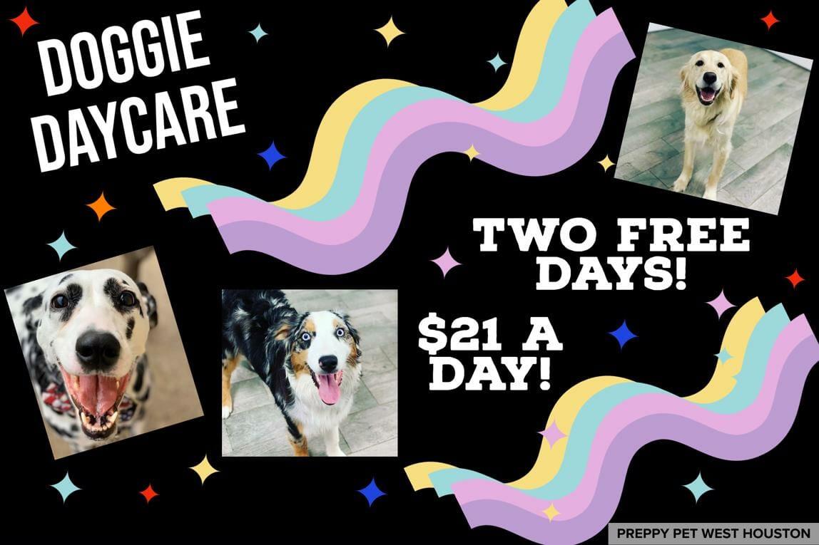 Dog Daycare Rates | Preppy Pet West Houston